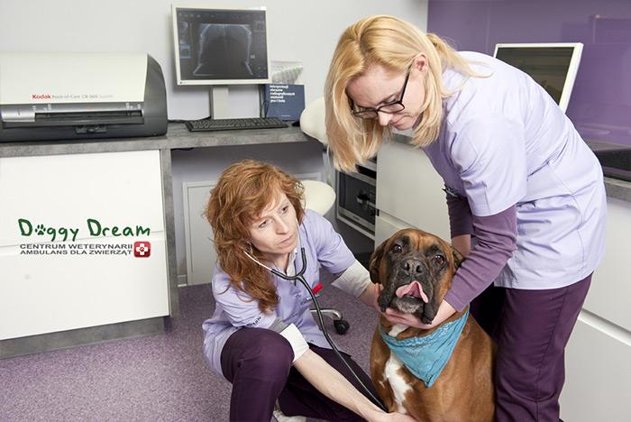 ветеринар диетолог
